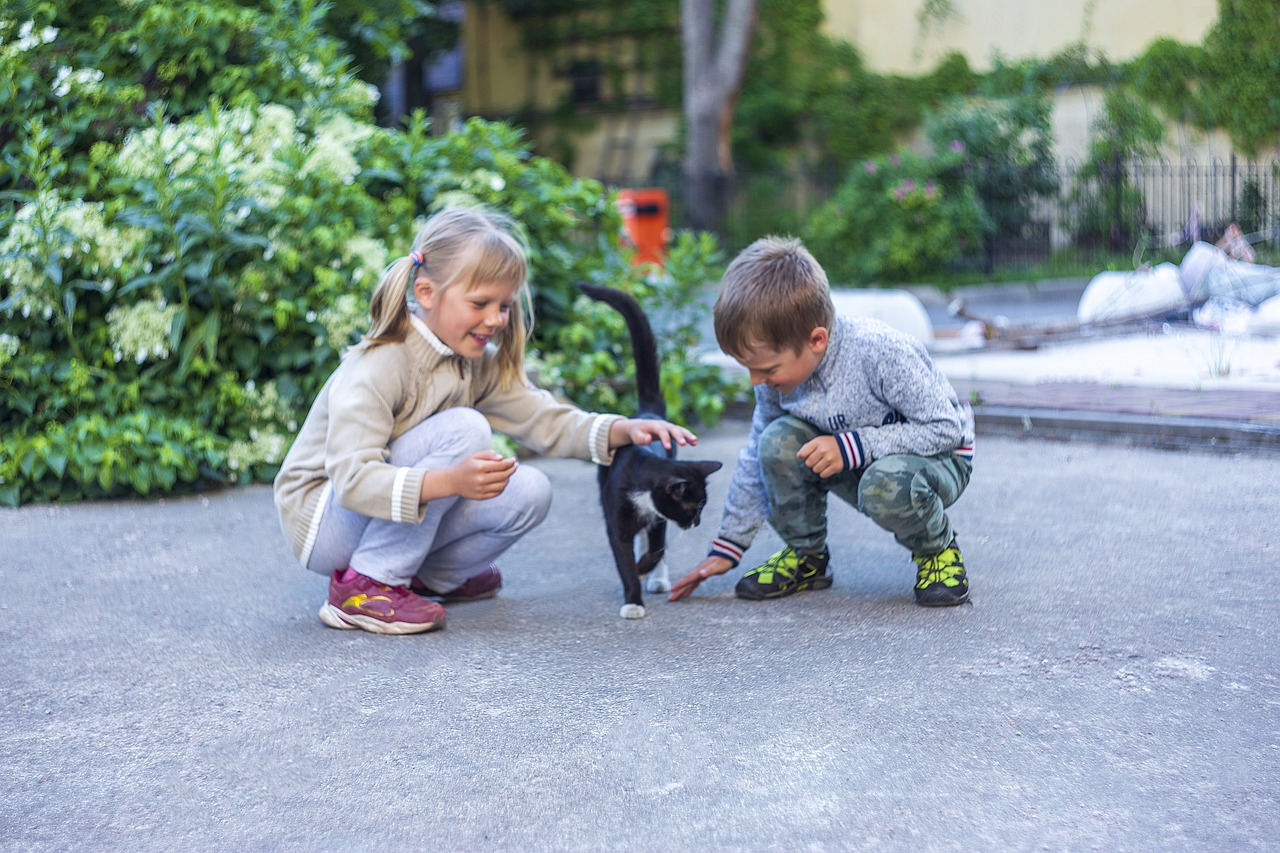 CONTACT WITH CATS IS USEFUL FOR AUTISTIC CHILDREN – RESEARCH